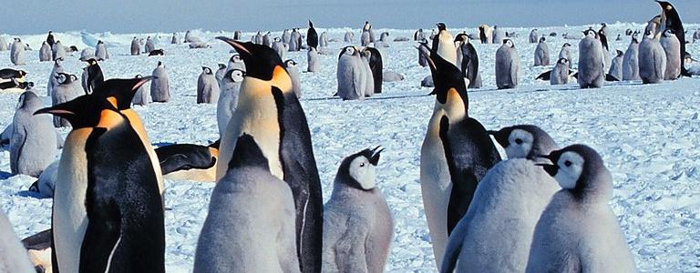 penguin opener